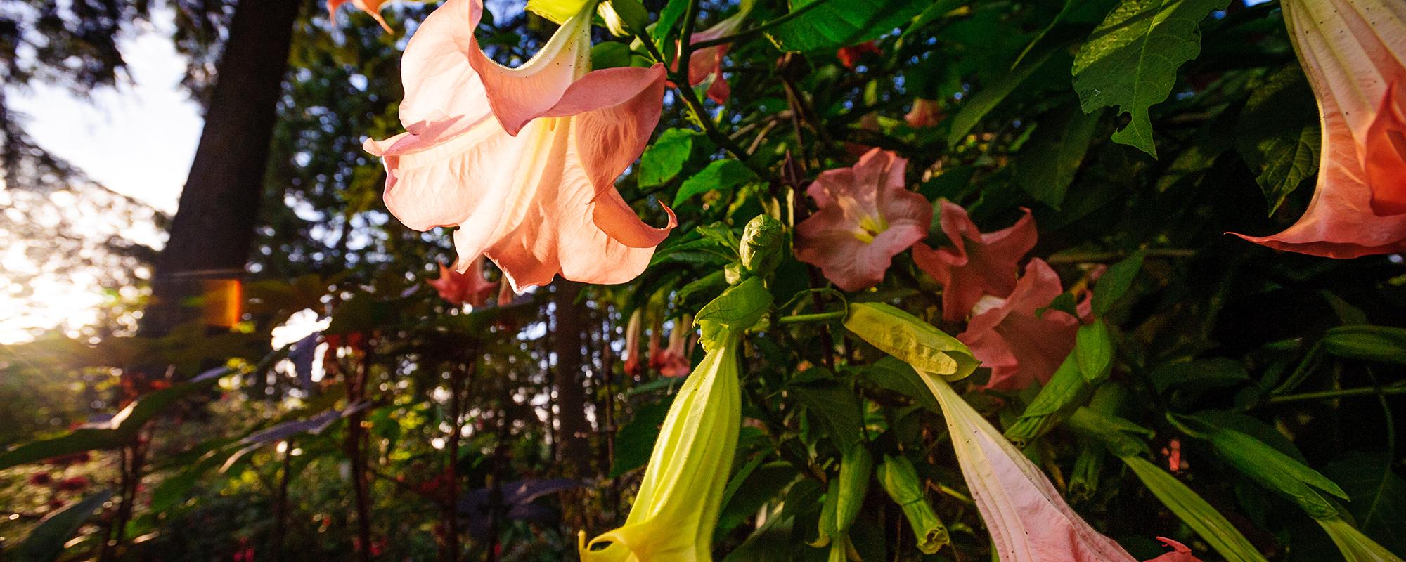 anne_garden10.18.15-220-v2